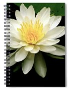Lotus Flower Spiral Notebook