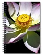 Lotus Of The Night Spiral Notebook