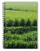 Louisiana Cane Field Spiral Notebook