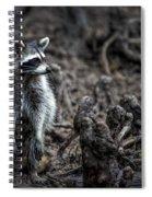 Louisiana Raccoon Spiral Notebook