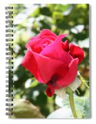 Love In Red Spiral Notebook