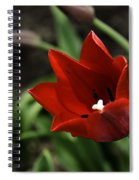 Love Tulip Time Spiral Notebook