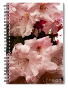 Lovely Pink Rhododendrons With Border Spiral Notebook