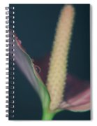 Lovely Things Spiral Notebook
