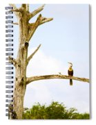 Low Angle View Of Cormorants Spiral Notebook