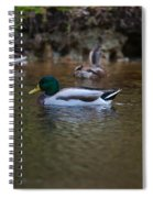 Lowcountry Duck Gathering Spiral Notebook