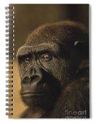 Lowland Gorilla Spiral Notebook