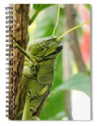 Lubber Grasshopper Squared Spiral Notebook