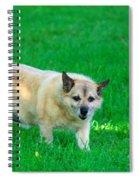 Luksi Spiral Notebook