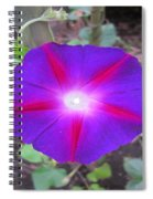 Luminous Morning Glory In Purple Shines On You Spiral Notebook