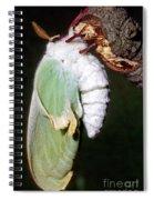 Luna Moth Actias Luna Newly Hatched Spiral Notebook