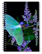 Luna Moth Astilby Flower Black Spiral Notebook