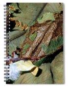 Luna Moth Emerging From Cocoon Spiral Notebook
