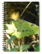 Luna Moth In The Sun Spiral Notebook