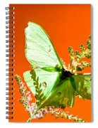 Luna Moth On Astilby Orange Back Ground Spiral Notebook