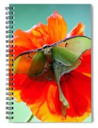 Luna Moth On Poppy Aqua Back Ground Spiral Notebook