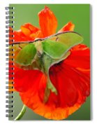 Luna Moth On Poppy Square Format Spiral Notebook