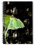 Luna Moth On Tree Spiral Notebook
