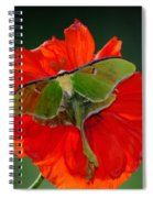 Luna Moth Orange Poppy Green Bg Spiral Notebook