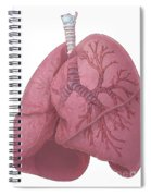 Lungs And Bronchi Spiral Notebook
