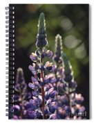 Lupine At The Gate Spiral Notebook