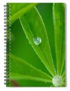 Lupine Dreams Spiral Notebook