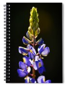 Lupine  Spiral Notebook