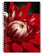 Lush Red Dahlia Spiral Notebook