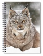 Lynx Stare Spiral Notebook