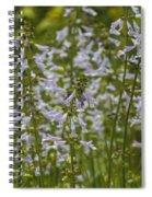 Lyreleaf Sage Wildflowers - Salvia Lyrata Spiral Notebook