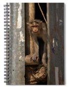 Macaque Peeking Out Spiral Notebook