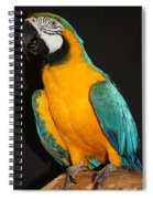 Macaw Hanging Out Spiral Notebook
