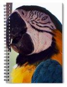 Macaw Head Study Spiral Notebook