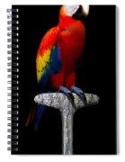 Macaw... Spiral Notebook