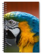 Macaw Tropical Bird Spiral Notebook