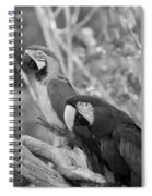 Macaws Of Color B W 14 Spiral Notebook