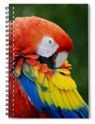 Macaws Of Color28 Spiral Notebook