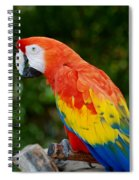 Macaws Of Color33 Spiral Notebook