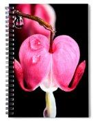 Macro Bleeding Heart Spiral Notebook