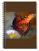 Macro Butterfly Spiral Notebook