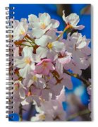 Macro Dc Cherry Blooms Spiral Notebook
