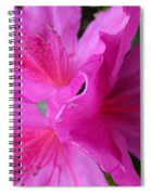 Macro Purple Azalea Flower Spiral Notebook