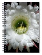 Magic Of The Night Spiral Notebook