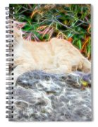 Magical Cat Spiral Notebook