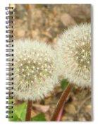 Magical Dandelion Spiral Notebook