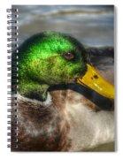 Magnificent Mallard Spiral Notebook