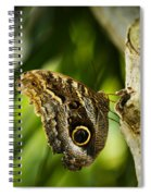 Magnificent Owl Butterfly Spiral Notebook