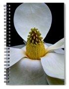 Magnolia Beauty Spiral Notebook