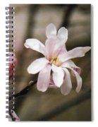 Magnolia Blooms Spiral Notebook
