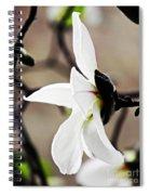 Magnolia In Profile Spiral Notebook